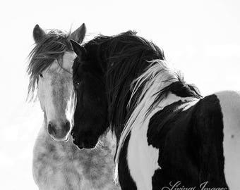 Indigo and Washakie - Fine Art Wild Horse Photograph - Wild Horse - McCullough Peaks - Washakie