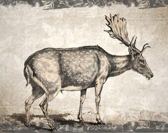 Digital download vintage look deer