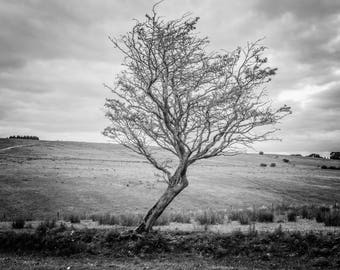 Tree , Fine Art Print, Home Decor, Black and White Photography