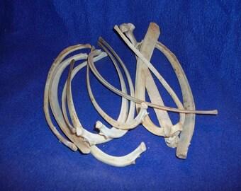 5 real animal deer rib bones skeleton parts knife handle cage craft man cave voodoo