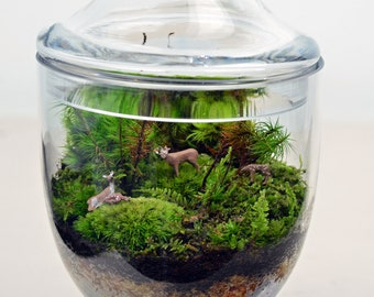 Terrarium // Live Moss // Deer Figures // Miniature Apothecary Jar // Home and Garden