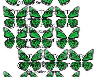 Green monarch butterfly wings