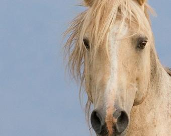 Portrait of Cloud - Fine Art Wild Horse Photograph - Wild Horse - Cloud - Pryor Mountains - Fine Art Print