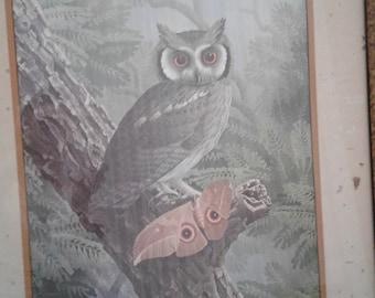 Vintage! 1970's Owl Print/ Signed Simon Calburn/ Trees/Butterfly/Owl/ Ethan  Allen Framed