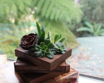 Reclaimed Timber - Succulent Planter - Small Timber Planter Box - Spotted Gum
