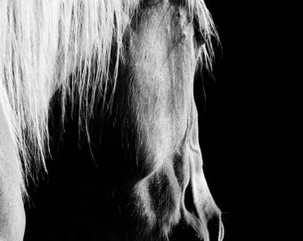 Black and White Horse Photography Print Equestrian Art