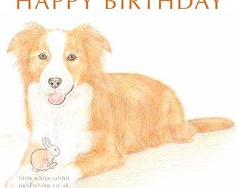 Amber the Border Collie - Birthday Card