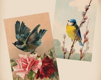 Klein Bird Roses 2 New 4x6 Vintage Image Photo Prints FN21 FN15