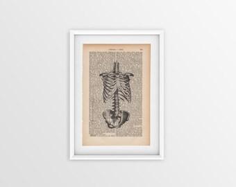 Skeleton on an old page, vintage print of skeleton a page from 1877, Gothic font, print of a skeleton, vintage print of bones