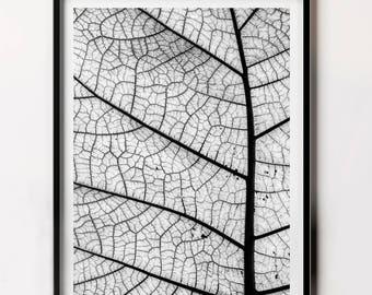 Plant Leaf Wall Art, Woodland Print, Nature Photo, Minimalist Nature Photography, Nature Art, Leaf Print Downloadable