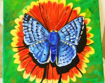 Blue Metalmark Butterfly 12x12 Oil