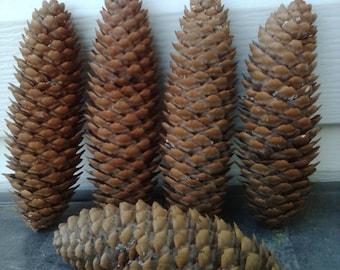Large pinecones, decorative pinecones, natural decor, rustic decor, pinecone decor, basket fillers, big pine cones