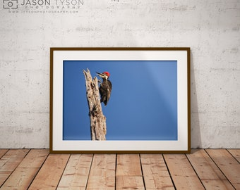 Woodpecker Print | Wall Art | Photography | Wall Decor | Prints | Canvas | Home Decor | Art Prints | Animals | Wall Hanging | Large Wall Art