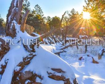 Winter Yule Log