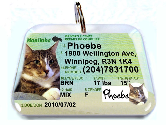 Canada driver license manitoba personalized custom id tags for negle Choice Image