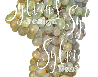 Beautiful Vintage botanical watercoulor digital download- Grapes-fruit