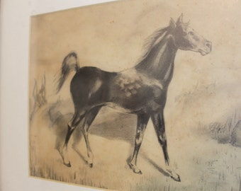 Framed Vintage Graphite/ Pencil Drawing of Horse