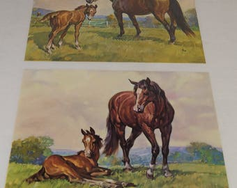 Vintage Horse & Foal Litho Prints Donald Art Company dated 1966 Set of 2