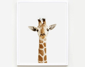 Baby Animal Nursery Art Print. Giraffe Little Darling. Safari Animal Print. Animal Wall Art. Animal Nursery Decor. Baby Animal Photo.