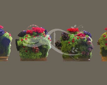 Flower arrangements with preserved plants