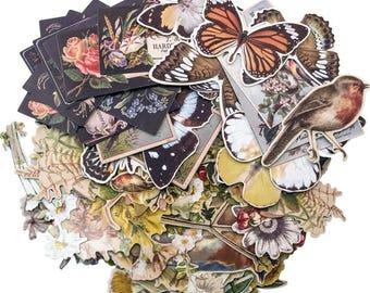 BOTANICAL DIE CUTS, Tim Holtz Botanical, Nature Ephemera, Nature Ephemera, Tim Holtz Ephemera, Ideaology Ephemera, Vintage Nature Die Cuts
