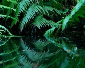 Green ferns photography, fineart print, nature wall art, home decor