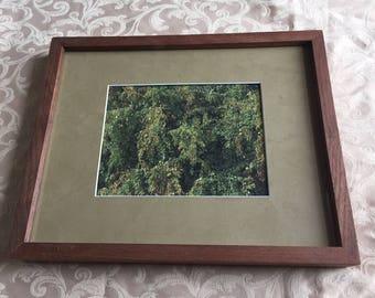 Framed Foliage Print