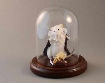 Taxidermy Hamlet Shakespeare Mouse Cape and Ruffled Collar