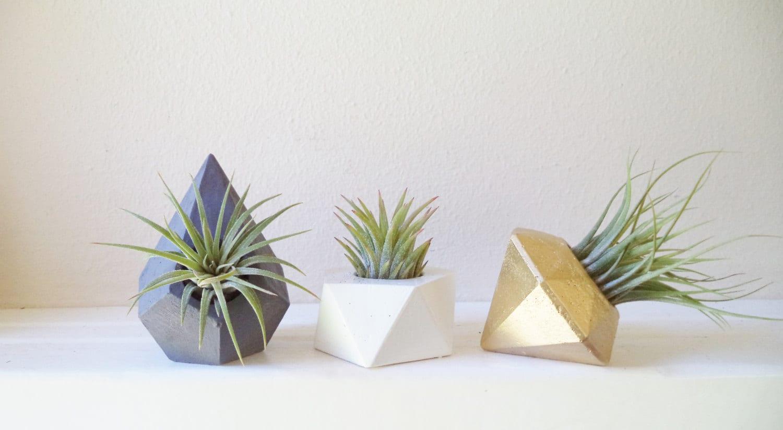 Mini plant wedding favors small air plant holders modern