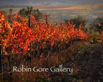 Autumn in the Vineyards - 06   (PRINT)