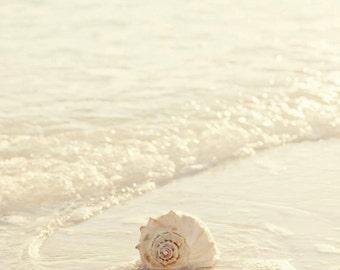 beach photography, seashell photography, beach cottage art, white home decor, ocean photograph, whelk, seashell art, nature wall art