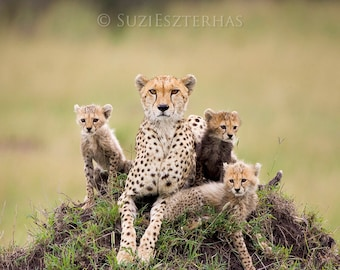 Animal Nursery print, Baby Cheetah and Mom Photograph, Mom and Baby Animal Photo, Wildlife Photography, African Safari, Cat, Cheetah Cub