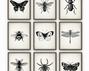 Insect Wall Art Poster Set Of 9 - Entomology Art Prints - Bumblebee Dragonfly Butterfly Beetle Wasp Moth Home Decor - Entomology Art (AB45)