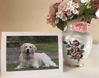 Golden retriever dog blank greetings card