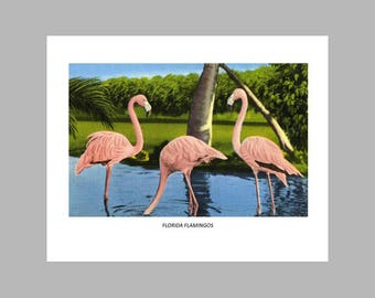 Postcard Print - Pink Flamingos - Florida - 8x10 Poster Print, Also available in 11x14 and 16x20. Wall Decor, Art Print, Ready to Frame