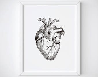 Anatomical Heart Print, Human Heart Anatomy Print, Heart Illustration, Heart Anatomy Print, Vintage Medical Illustration, Heart Wall Art