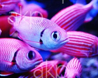 "16"" x 24"" Ready-to-Hang Bright Pink Tropical Fish Canvas Print"