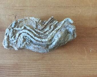 Snake Range Folded Calc-Silicate Rock