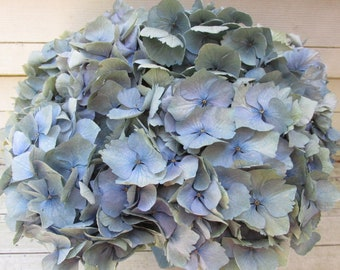 Dried Hydrangea Flowers 8 Stems Light Blue, Green and Cream  Color, Wedding, Bouquet, Cottage Craft, Home Decor, Rustic, Floral Farmhouse