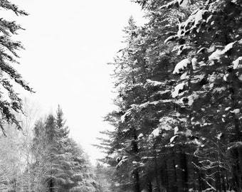 Art, Photography, Wall Art, Nature, Home Decor,Fine Art Print, Snow Pines,White, Winter,Michigan Print, MI Art,Winter,Winter Print,Snow Art,