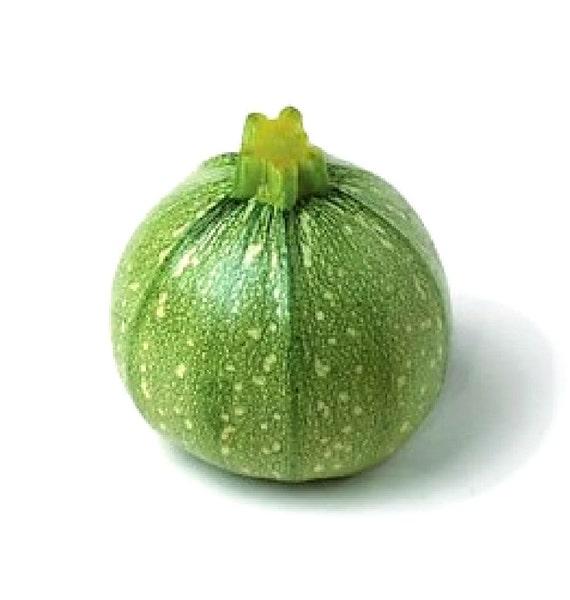 bio zucchini samen hellgr n runde zucchini erbst ck samen. Black Bedroom Furniture Sets. Home Design Ideas
