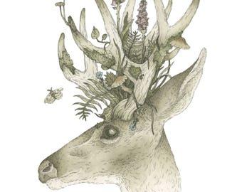 Spring Buck ~ Giclee Print