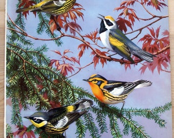 Vintage warblers  illustration by Walter A Weber, from the book Traveling with Birds, copyright 1928., child'a wall art, birding wall art