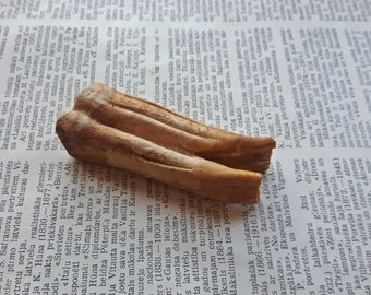 Genuine tooth, Natural Horse tooth, Real tooth for jewelry making, natural fang
