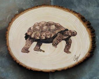 Wood-Burning: Giant Tortoise