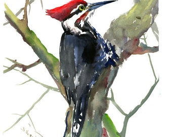 Pileated Woodpecker Artwork , original watercolor painting, woodpecker art, woodpecker painting, watercolor birds, USA,