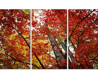 Autumn Forest Canvas Triptych, 3 Panel Art, LARGE, Ready to Hang