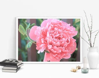 peonies images, flower photography, office art decor, pink peonies photos, bedroom wall art, canvas photo prints, art photography, peony art