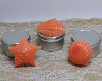 Seashell Tart Melts