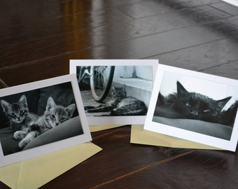 Cats - blank notecards with original photography